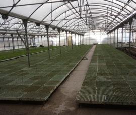 Iniciamos un proyecto para impulsar el cultivo del tomate