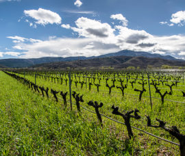 Exposición en Arnedo sobre la Ruta del Vino Rioja Oriental