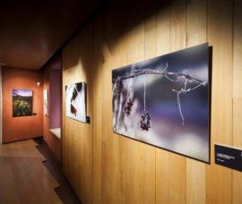 El Centro Fundación Caja Rioja-Bankia Calahorra acoge la exposición 'El Rioja y los 5 Sentidos'