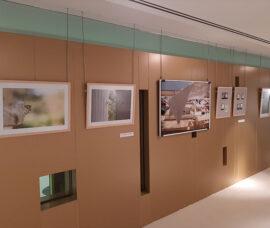 'Poéticas' se inaugura en el Centro Fundación Caja Rioja-Bankia Santo Domingo de la Calzada